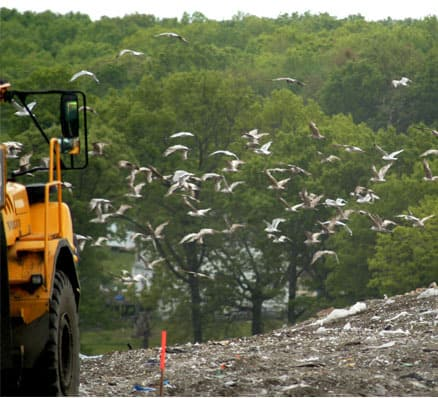 landfill with seagulls