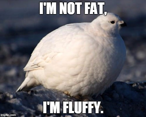 Fat Bird Meme fat bird meme bird x