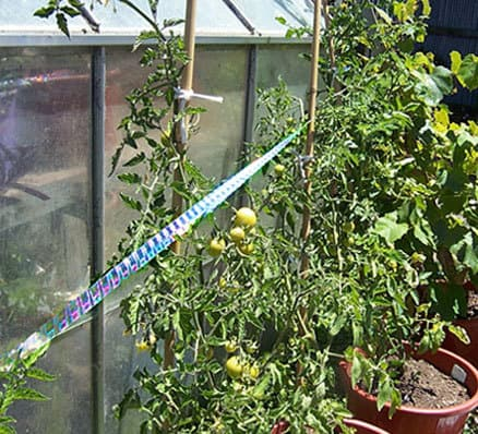 irri-tape for potted plants