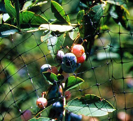 netting protecting berries from birds with physical exclusion