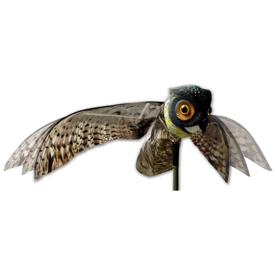 OWL alt pic
