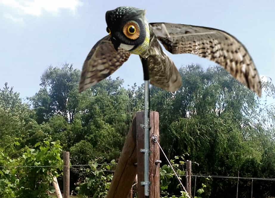OWL application pic