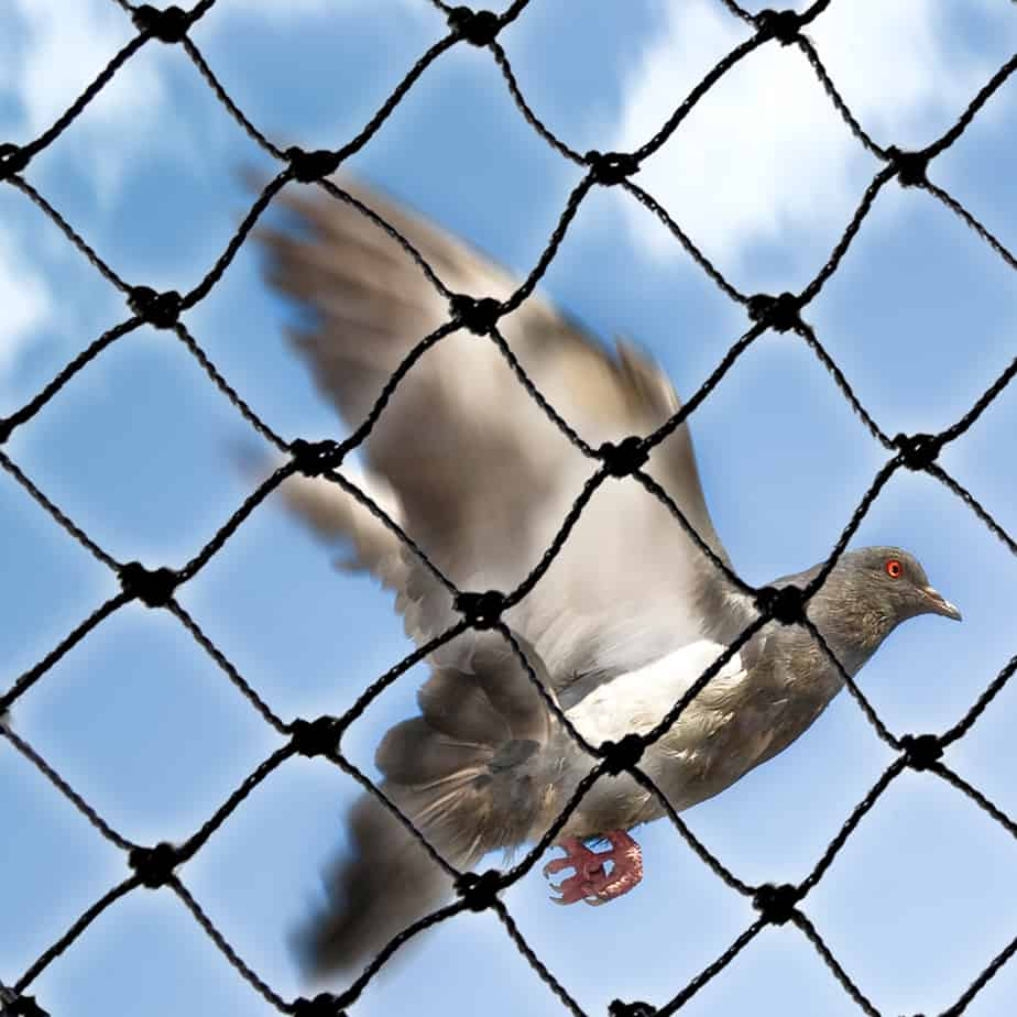 PE-PLUS netting with pigeon behind