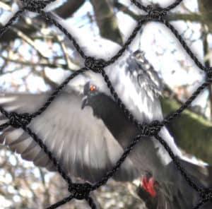 polyurethane netting with pigeon behind