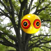 scare eyes balloon hanging in tree