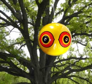 Scare-Eye_tree-app_full