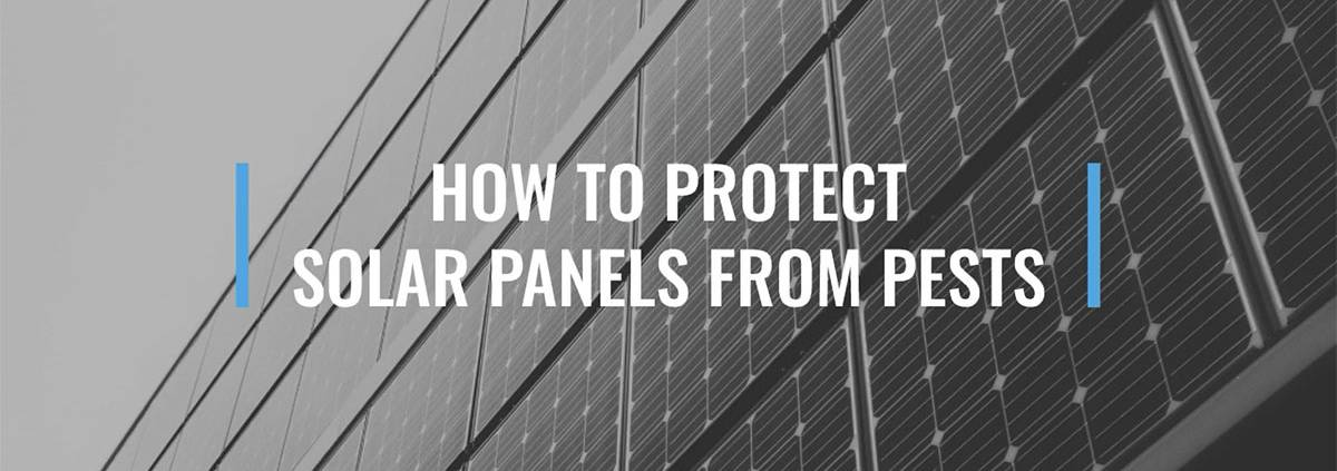 How to Protect Solar Mesh from Pests