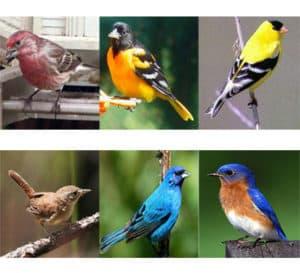 Songbirds_app2