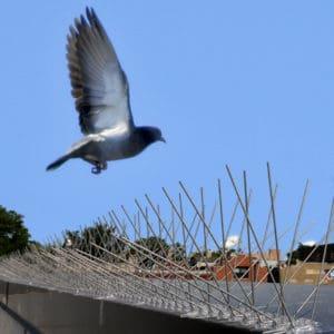bird flying towards spikes steel