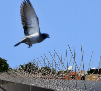 bird flying towards spikes steel