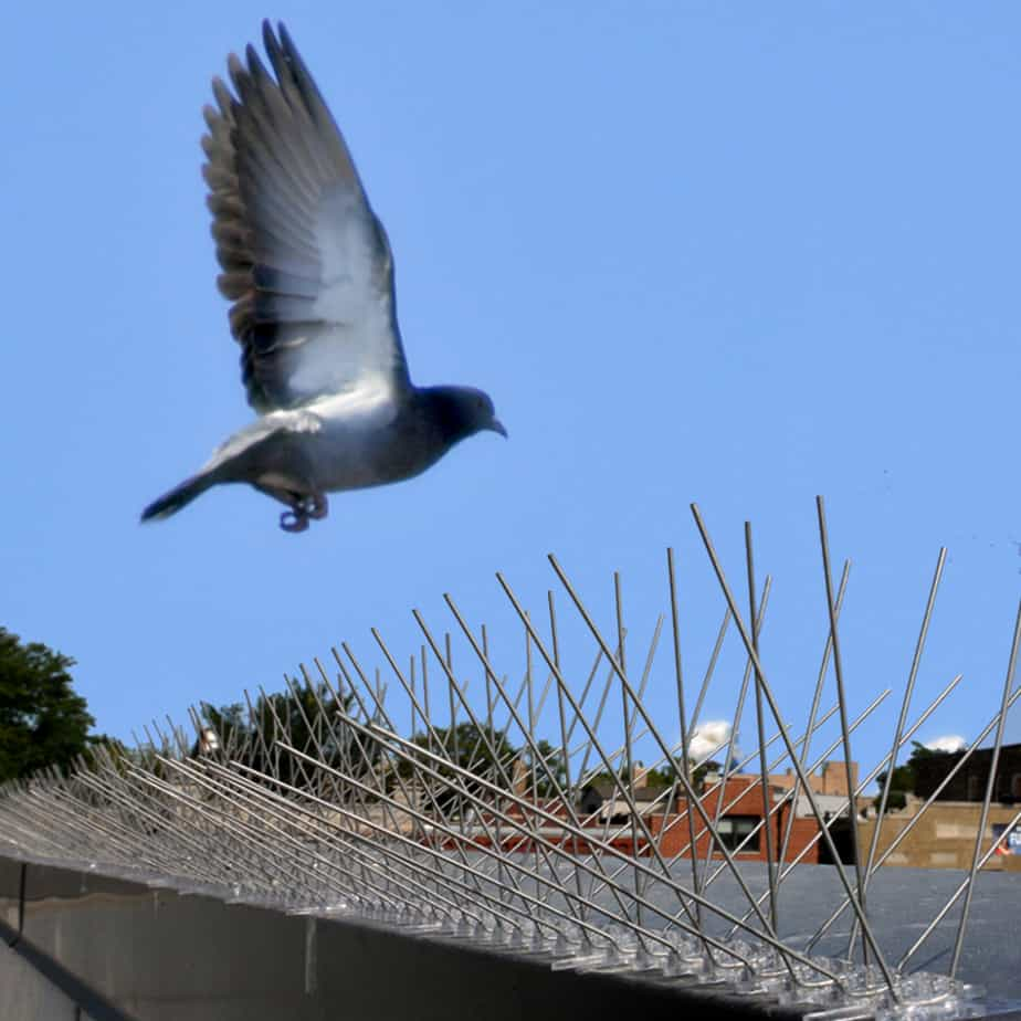 pigeon flying near stainless steel bird spikes