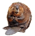 beaver deterrent device icon