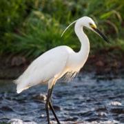 egret icon