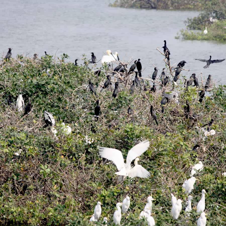 herons near water