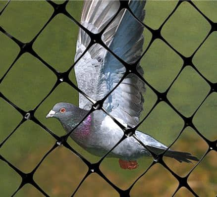 pigeon behind structural net
