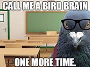 bird brain meme