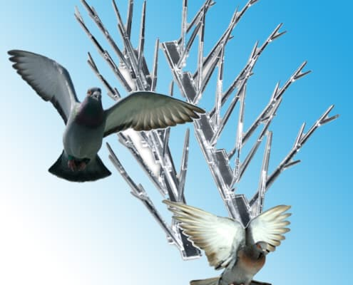 pigeons flying away from spikes with blue background