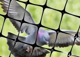 Bird netting to stop Pigeons