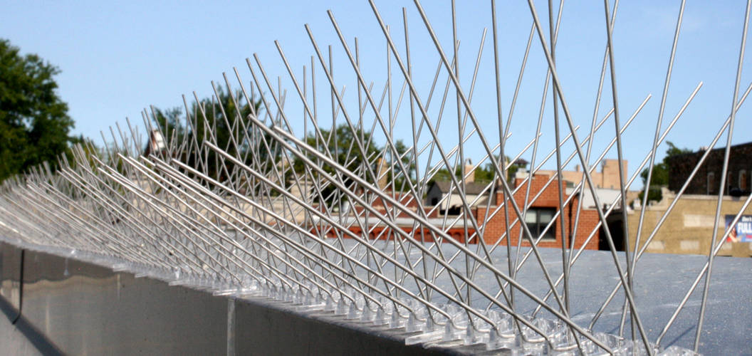 Bird Spikes For Bird Control And Deterrent Stainless
