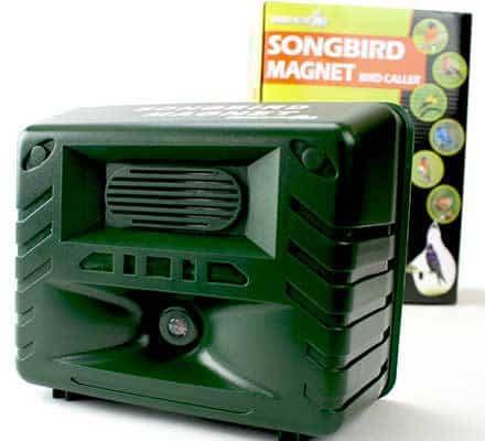 songbirdmagnet